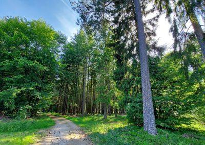 Waldweg, Bäume,